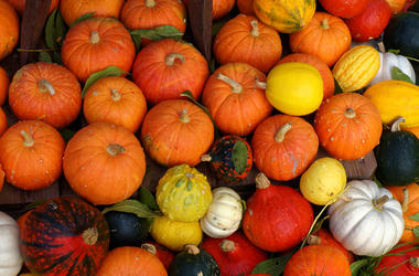 Topview shot of pumpkins in various colors and sizes, sorted outside in the garden. Harvest time. Halloween season.