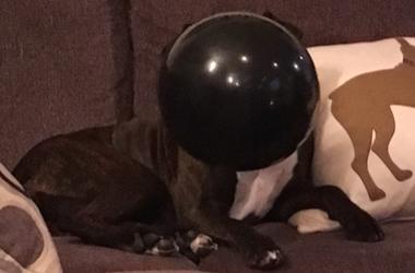 Mila loves her balloon