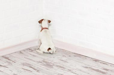 guilty dog in corner