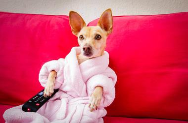 Cute Dog Watching TV
