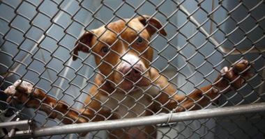 VA Tests on Dogs