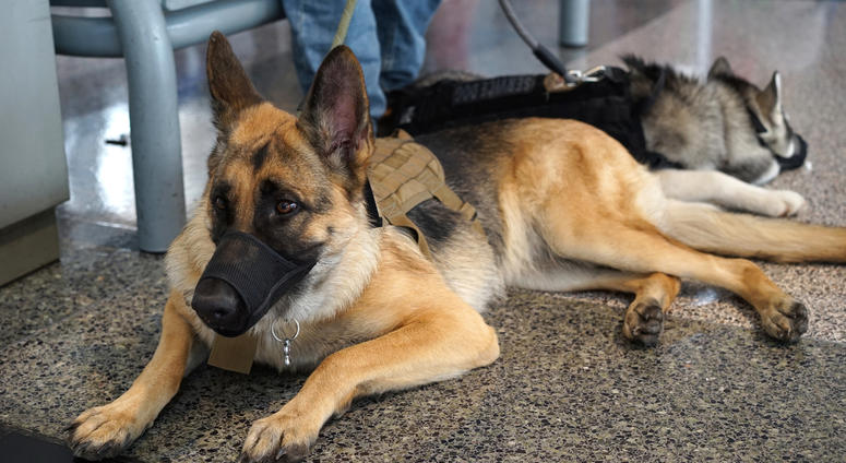 Two service dog registries are about to change how veterans