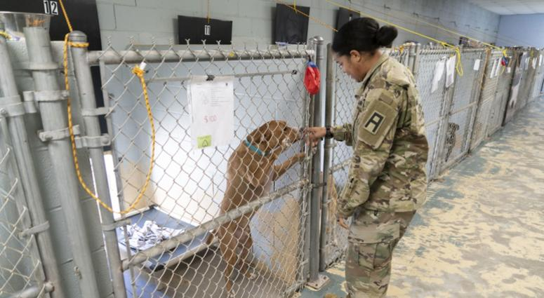 Soldier and shelter dog