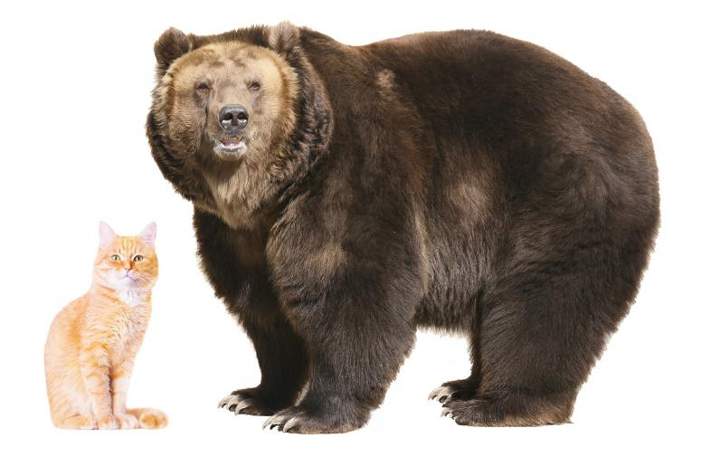 Image result for cat with bear