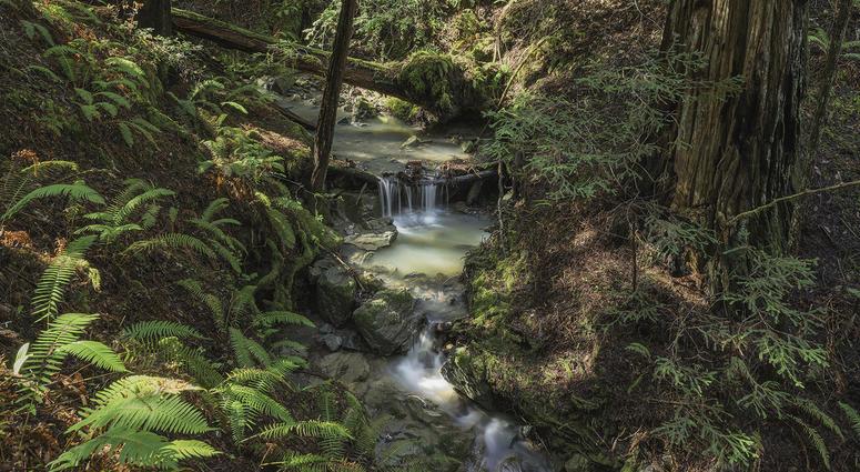 Harold Richardson Redwoods Reserve