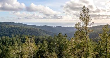 Redwood forests in the Santa Cruz mountains are protected under a deal involving the Peninsula Open Space Trust and and a logging company.