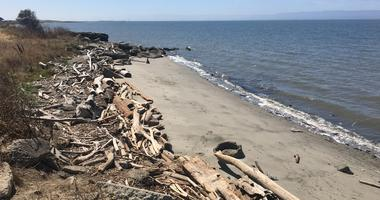 A stretch of the Bay Area coastline in San Leandro, California, on August 30th, 2019. -- Photo by Matt Bigler with KCBS Radio