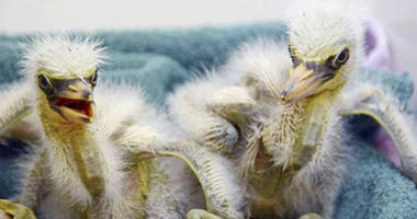 89 Baby Birds Need Care After Downtown Oakland Tree Falls