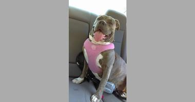A BART police officer shot Lily, a 4-year-old bulldog, who had allegedly lunged aggressively at the Civic Center station on Aug. 9, 2019.