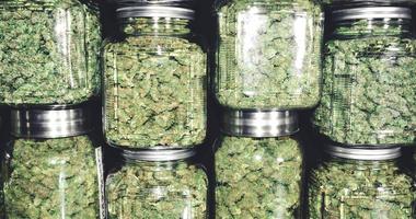 MJ buds in stack jars