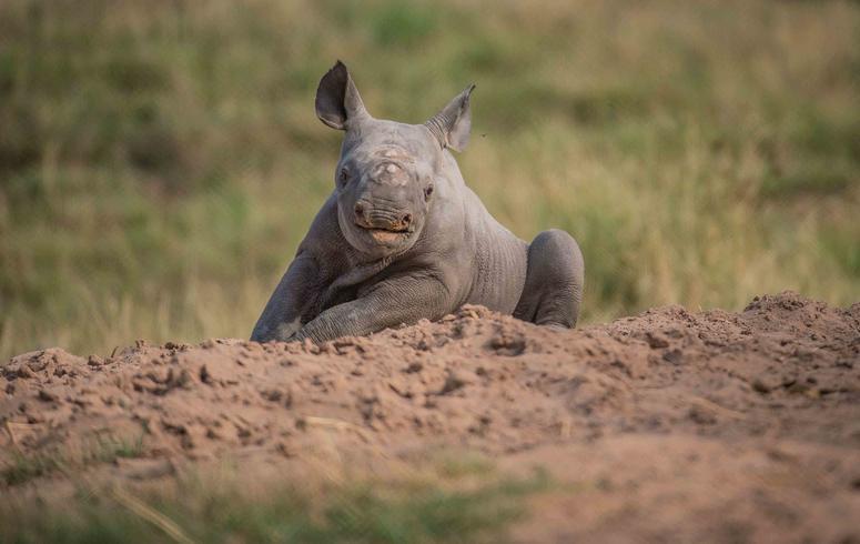 Black rhino birth a surprise to visitors