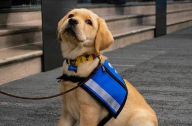 Barclay St. Louis Blues Pup