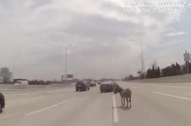 Donkey on highway