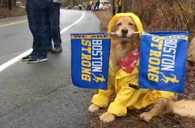Spencer the Boston Marathon dog