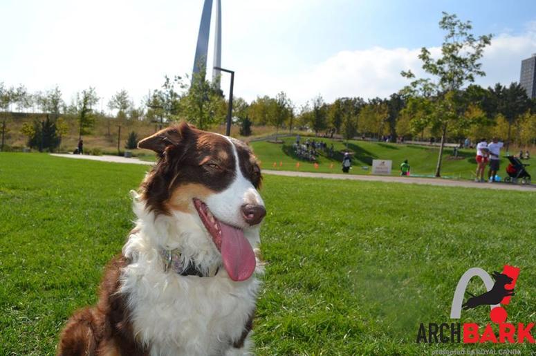 Arch Bark Photo