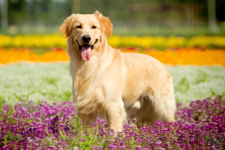Pets With Human Names | KISS 98 5