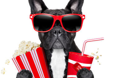 Dog With Popcorn And Drink