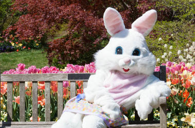 100.3 Jack FM,Easter Bunny,Scarry,Video,Elementary School,Kids,Terrified,Funny,Costume,Surprise
