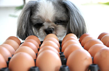 Dog Viral Egg Challenge
