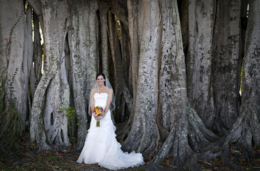 Wedding, Bride, Tree