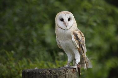 Owl, Bird, Animal
