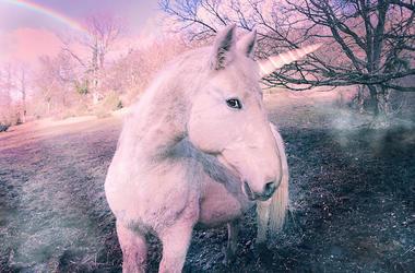 Unicorn, Animal, Mythical