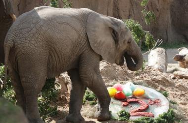Ajabu Eats Birthday Cake