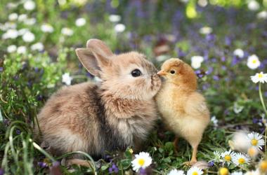 Bird_and_Bunny