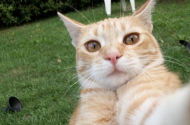Cat screams Goal