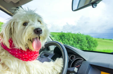 Dog,Truck,Driving,Car,Crash,Cell Phone,Store,China,Video,100.3 Jack FM