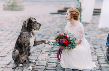 Dog_Wedding
