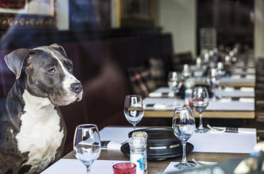Dog_at_Restaurant
