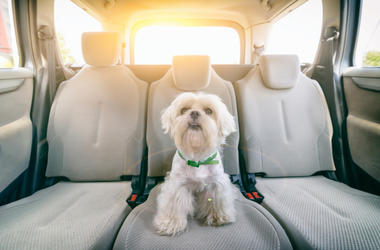 Dog_in_Car