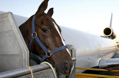 Horse on a plane
