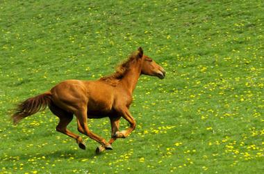 Hayley Moore,British,Reporter,Stops,Charging,Horse,Race,Chepstow,Racecourse,Wales,Video,Hero,Brave,Fearless,100.3 Jack FM