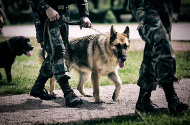Soldier with military working dog