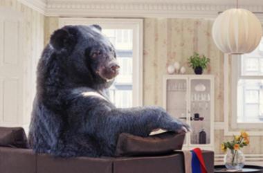 Bear sitting on sofa