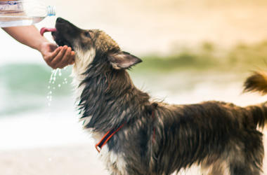 Dog, Drinking, Human, Good Boy