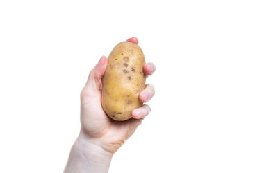 Hand Holding Potato