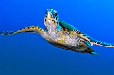 Sea Turtle, Turtle, Ocean, Swimming, Clear Water, Water