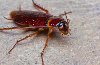 Cockroach, Concrete, Outside, Close Up, Bug