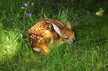 Bambi, Deer, Animal, Disney, Sleeping, Cute