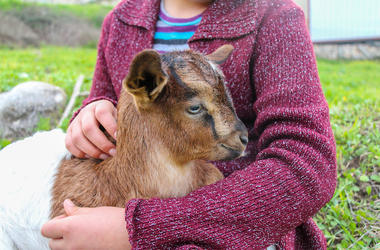 Little Girl, Baby Goat, Cuddle