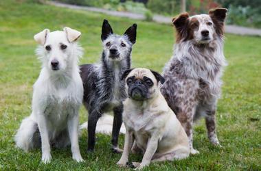 Dogs, Lawn, Outside