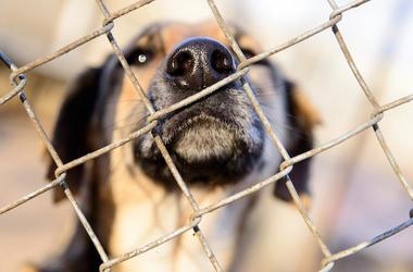 Dog, Face, Snout, Shelter, Cage