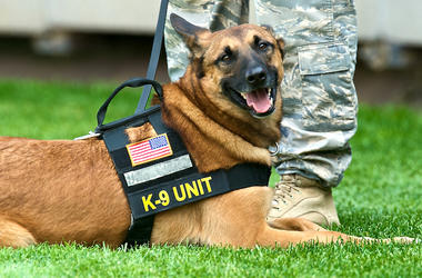 Police Dog, K9 Unit, Smile, Uniform