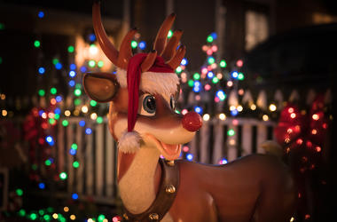 Rudolph, Christmas, Decoration, Lights, Front Yard