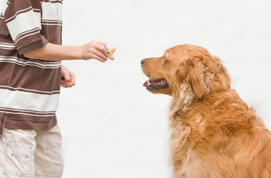 Boy, Dog, Treat