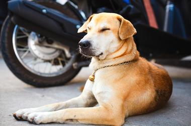 Dog on the street