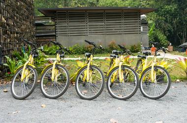 Yellow OFO Bikes